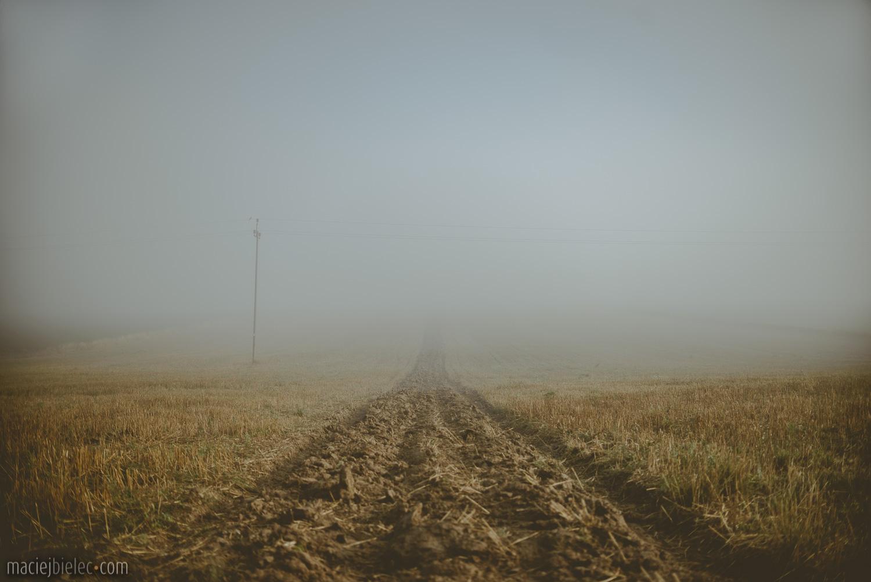 Ściernisko we mgle
