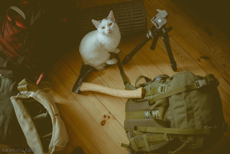 Spakowane bagaże plus kot