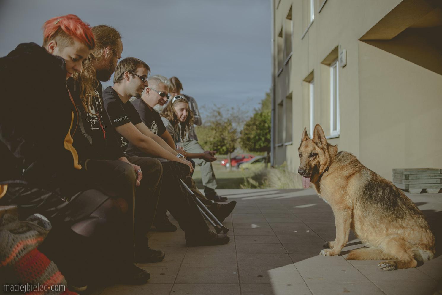 Pies i reszta zwierzyńca