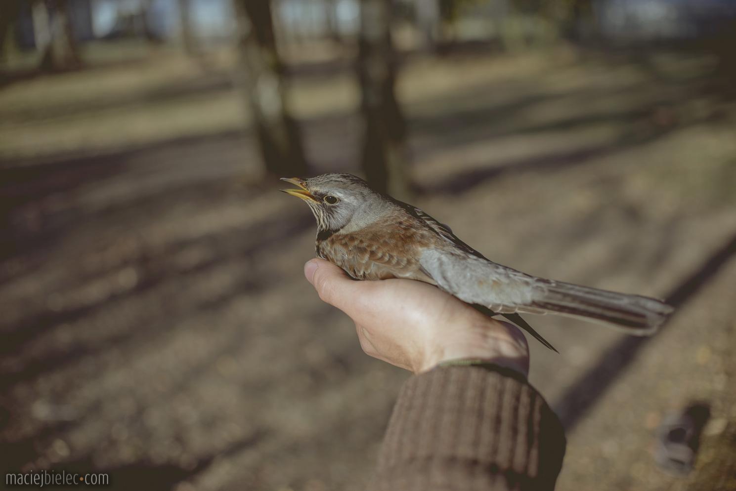 Ogłuszony ptak