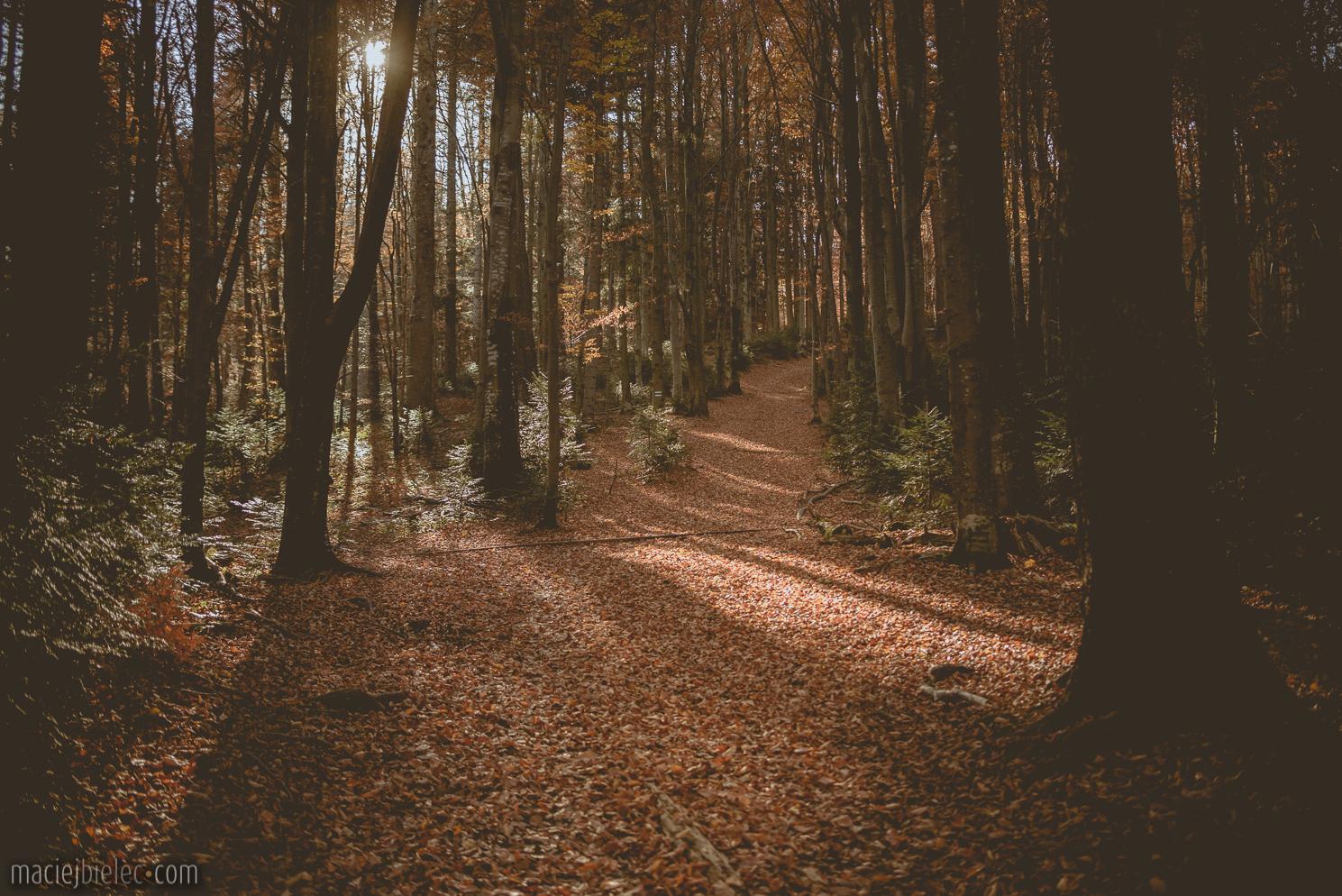 Leśny szlak Bieszczady